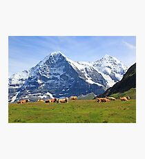 Switzerland alps Swiss mountains, Eiger with cows Photographic Print