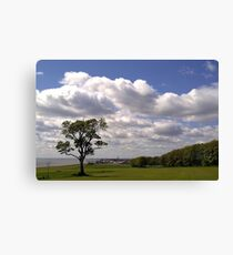 """""""Lone Tree - Sewerby Heads"""" Canvas Print"""