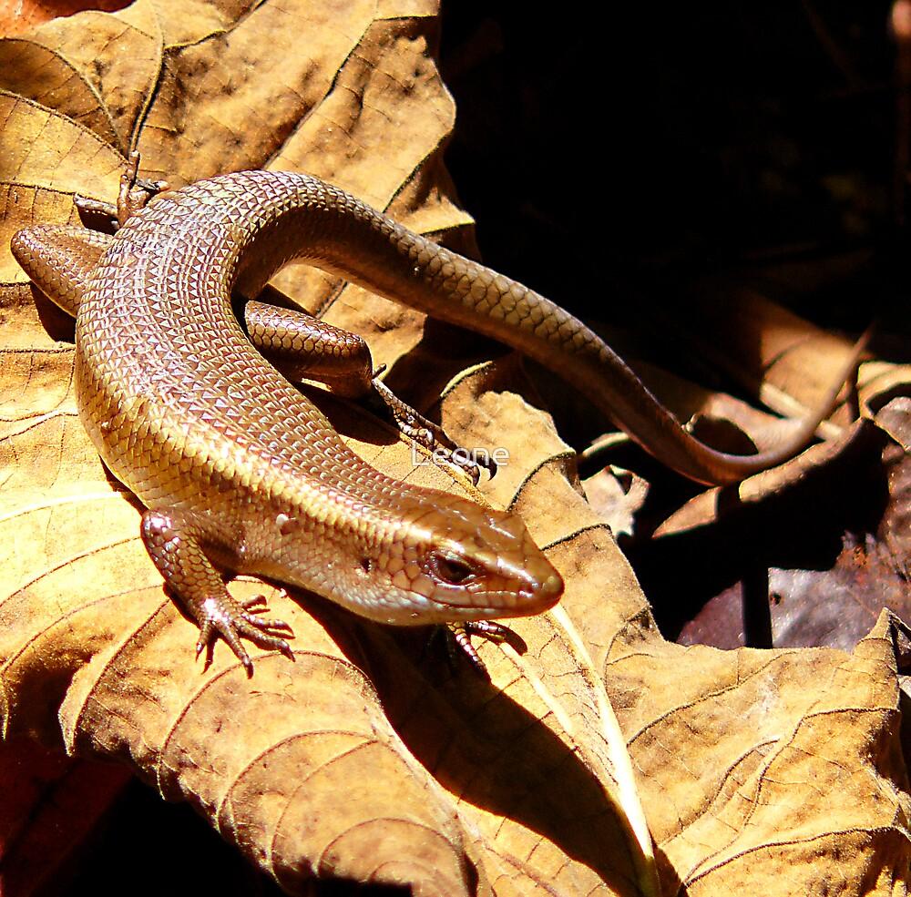 Golden Lizard by Leone