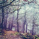 Peak District Forest  by Nicola  Pearson
