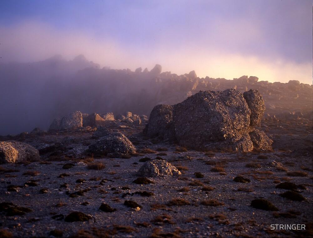 Ontop of Mt Owen West Coast Range by STRINGER