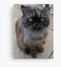 Goofy Cat Canvas Print