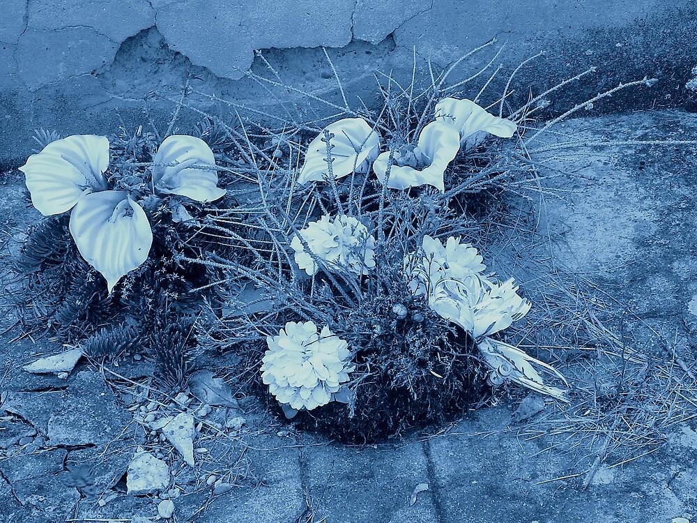 Blue mood by Plectrhelminthus