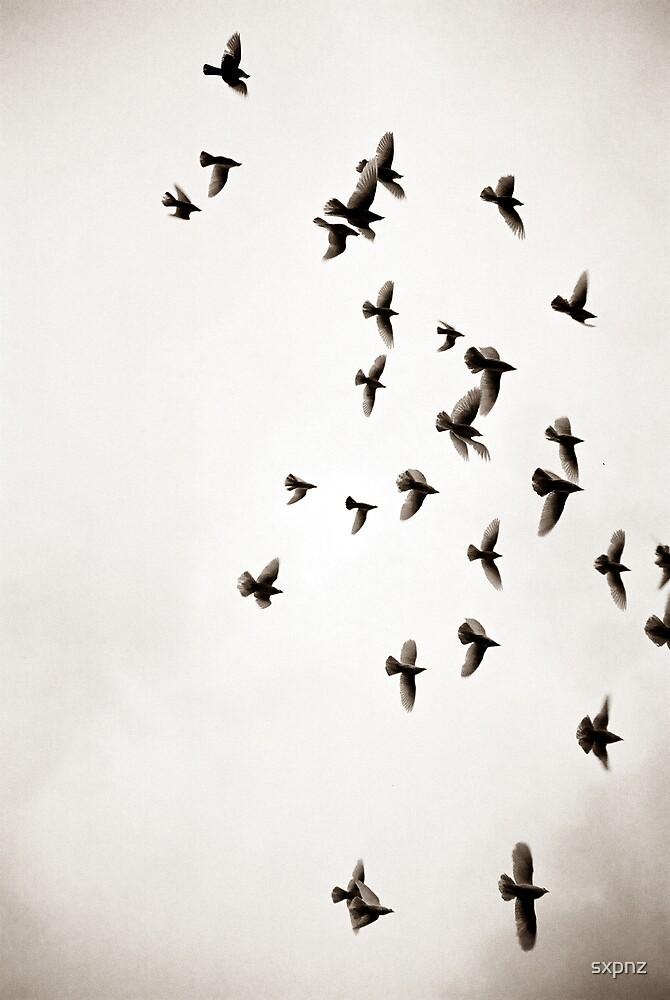 birds by sxpnz