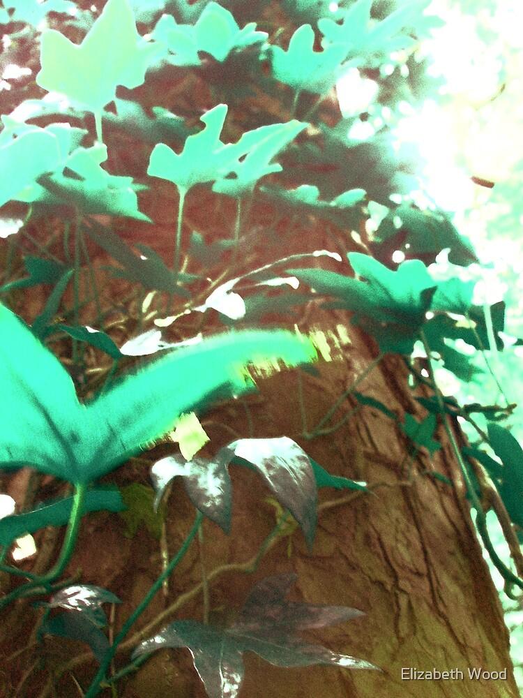Leaves by Elizabeth Wood