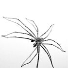 Spider Flower by Betsy  Seeton