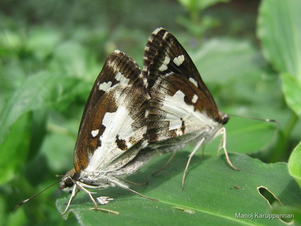 Two Butterflies by Manoj Karuppannan