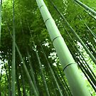 Bamboo Forest, Kyoto, Japan by Paul Tait