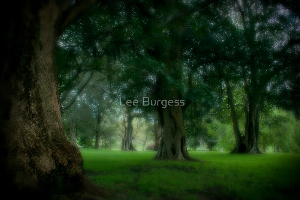 Magical.. by Lee Burgess