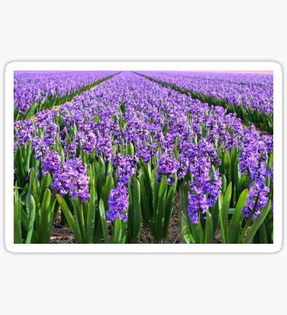 Purple Hyacinth Field Sticker
