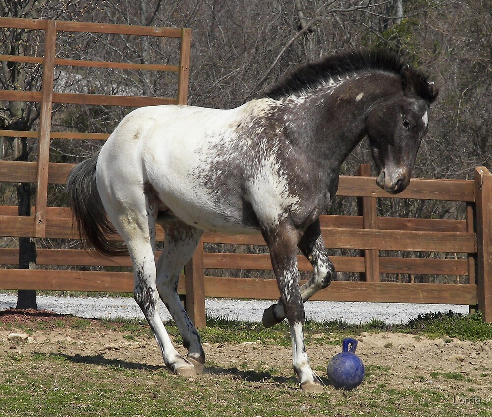 horse playin ball by Lorrie