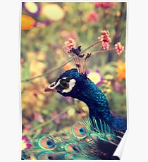 Peacock Flowers Poster