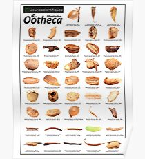 """Ootheca""  Poster"