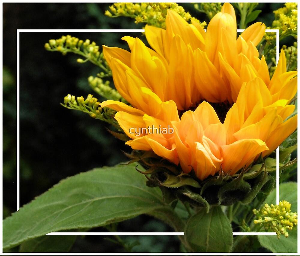 sunflower by cynthiab