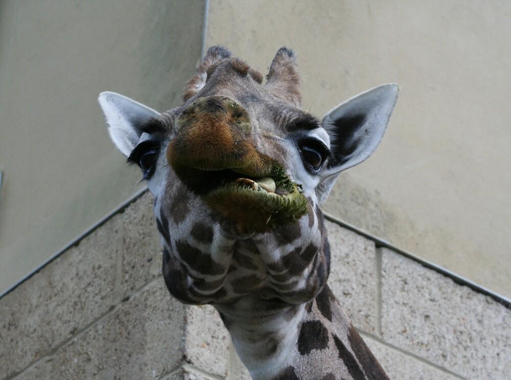 Tall Giraffe by AndyV