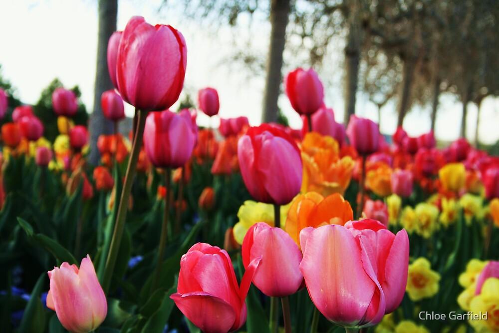 Tulips by Chloe Garfield