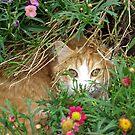 Poppy in the garden by Jodi Webb