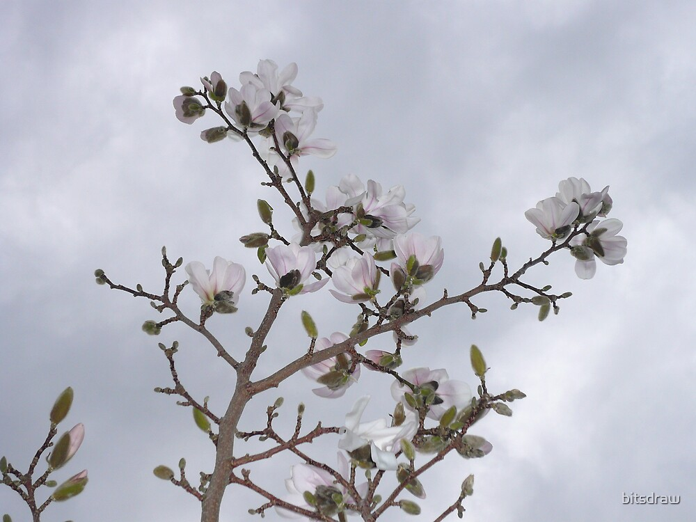 flowers by bitsdraw