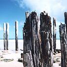 Port Willunga Jetty Posts by catdot