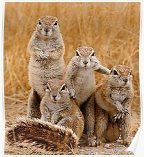 Squirrel Album Cover Poster