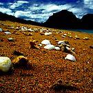 she sells sea shells on the sea shore by Ashley Ng