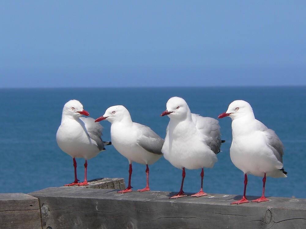 Seagulls by Jacko