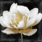 Gilda II White Peony with Gold by mindydidit