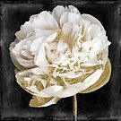 Gilda I Gold and White Peony by mindydidit