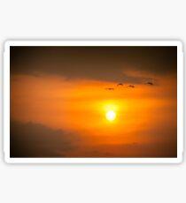 Kakadu Sunset Sticker
