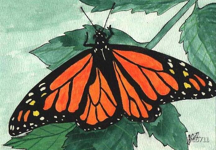 Monarch Butterfly by jeco711