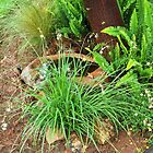 Ferns in my garden by Hedgie's Nature & Gardening Journal