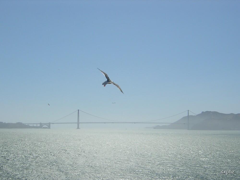 Seagull passing Alcatraz by sxpnz
