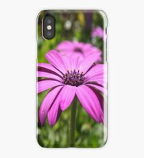 Side View Of A Purple Osteospermum With Garden Background iPhone Case