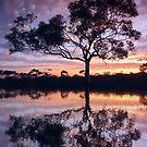 Sunset reflection - Kambalda, Western Australia by Steven  Sandner