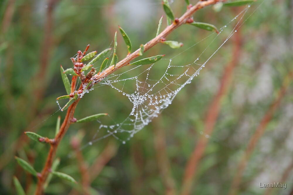 web by LenaMay