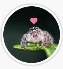 Jumping Spider Loves you Sticker