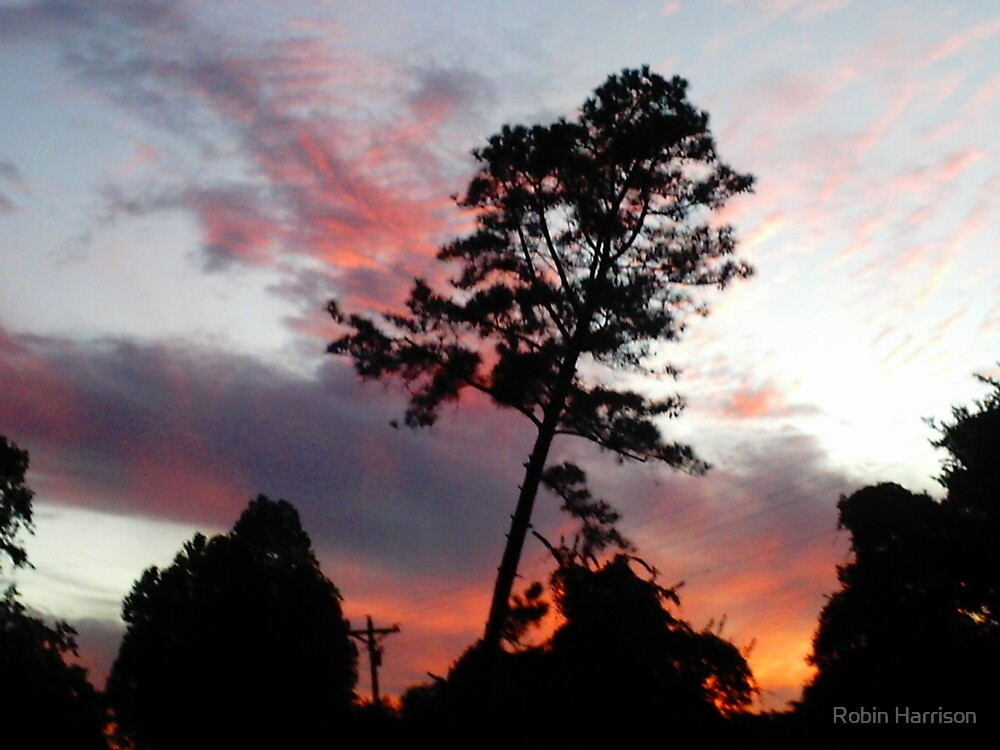 sunset pine by Robin Harrison