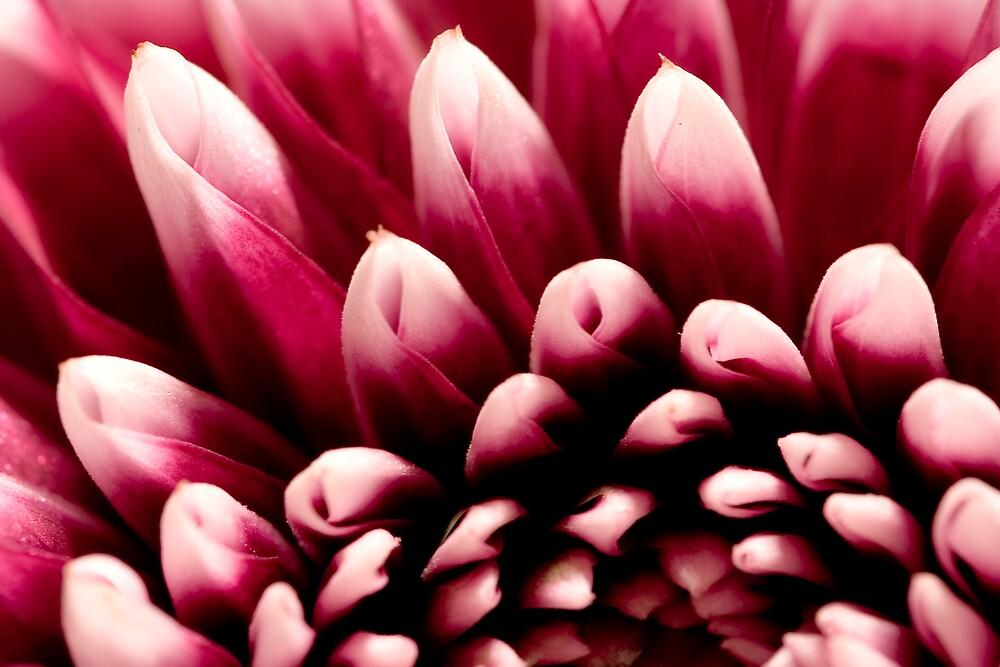 Small Petals by Chris Goor