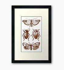 Graphic Insect Pattern Framed Print