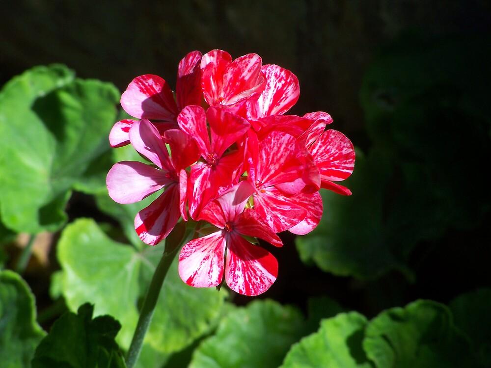 pretty flower by StacyLizeth