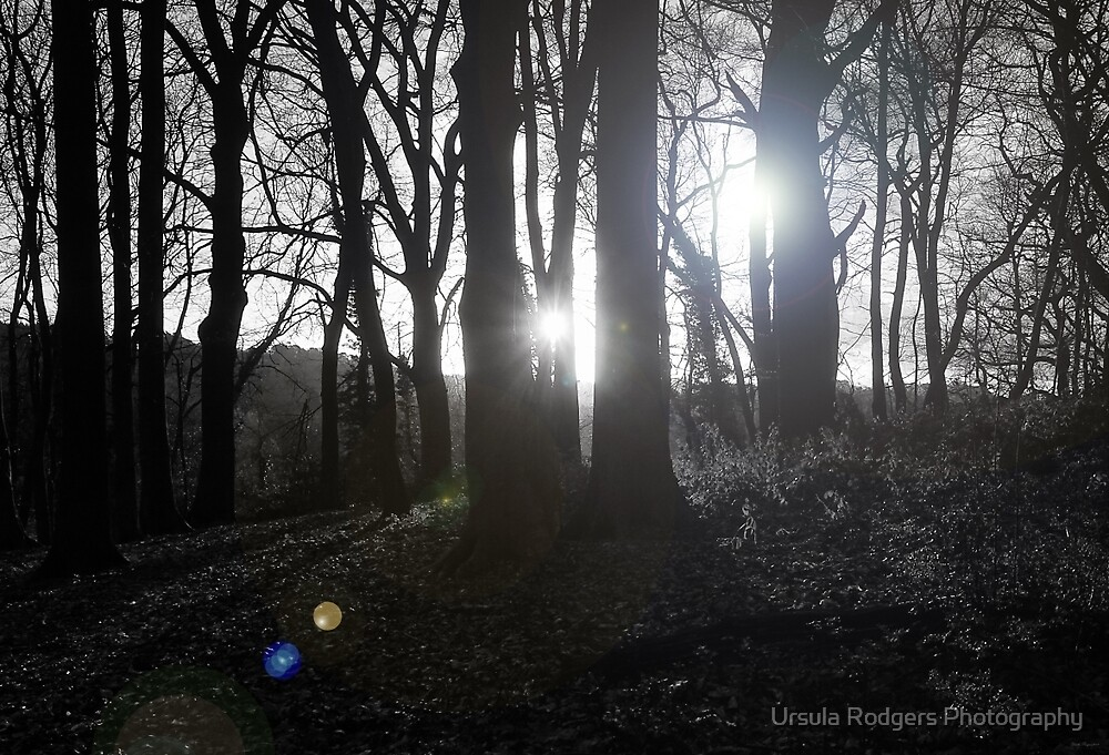 Two Suns by Ursula Rodgers Photography