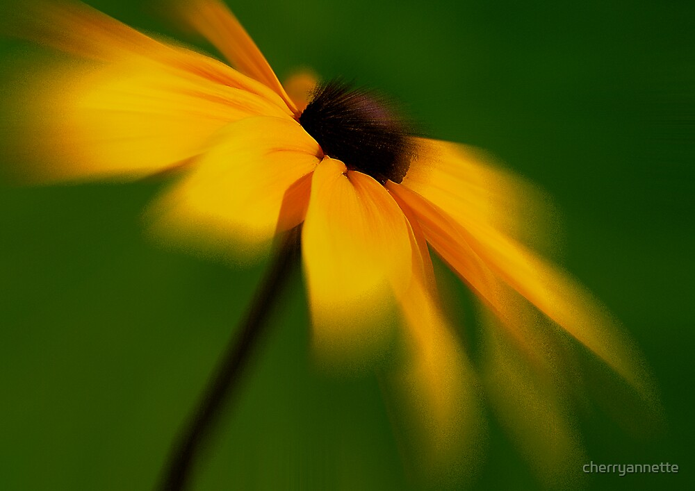 Brown eyed blur by cherryannette