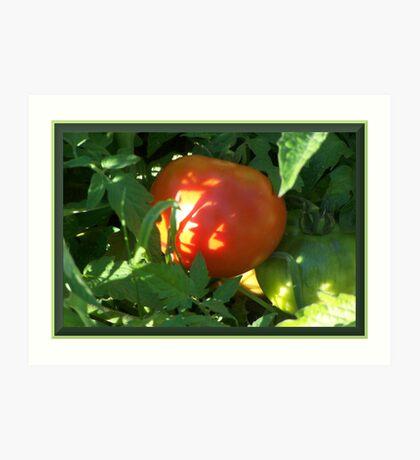 Tomato Devine Art Print