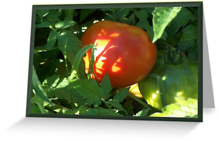 Tomato Devine by Starr1949
