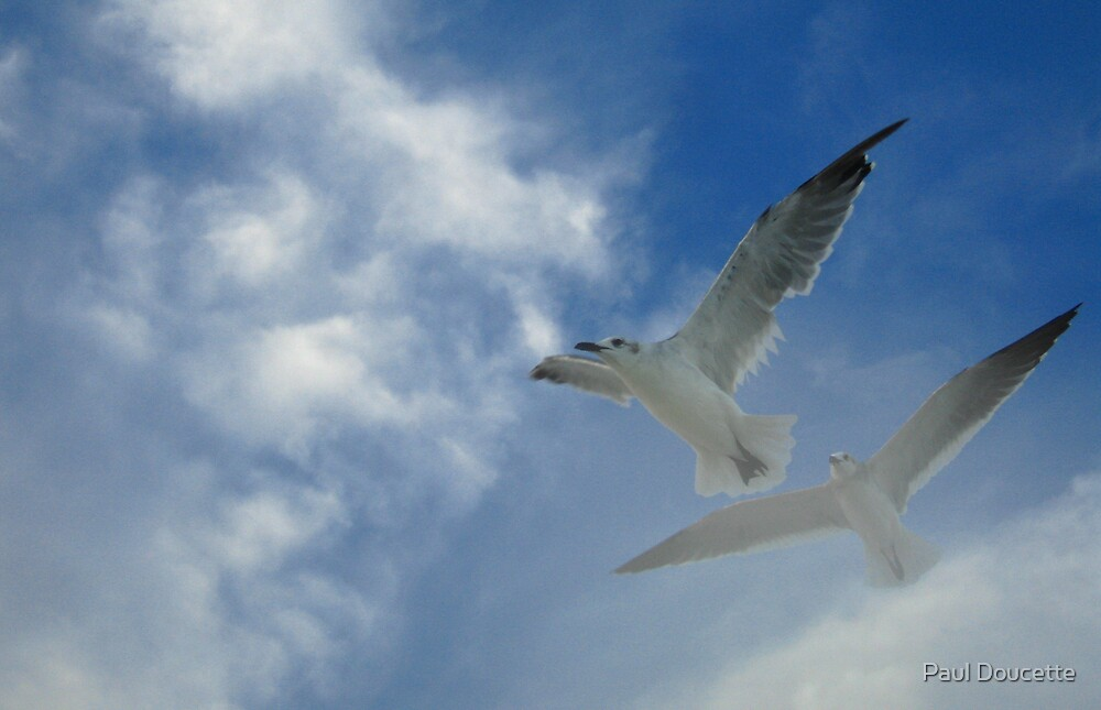Gliding in the wind by Paul Doucette