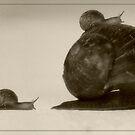 Piggyback by Evanickelbridger