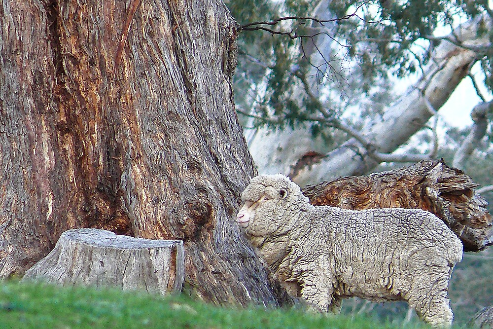 Woolybark by Samuel Gundry