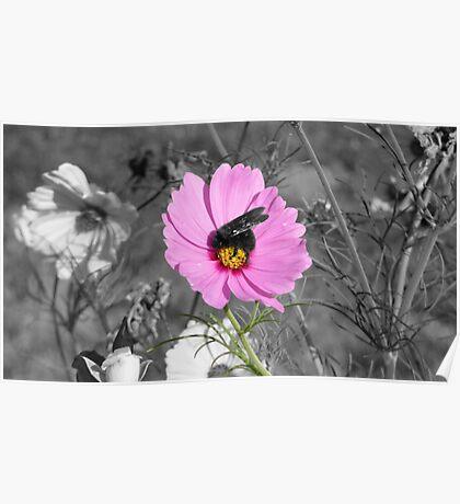 Flower Bee Poster