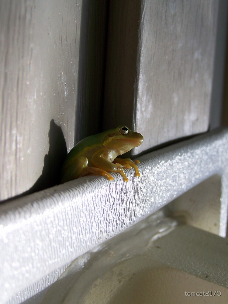frog by tomcat2170