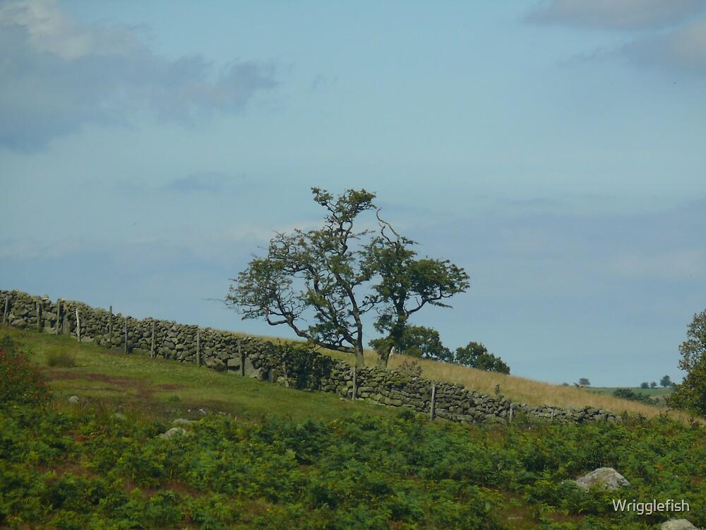 hillside by Wrigglefish